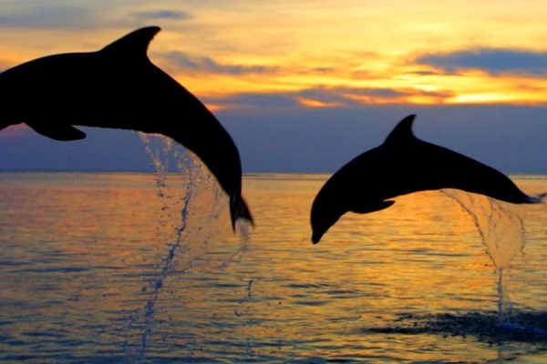 dolphins-bali-tours_fotor