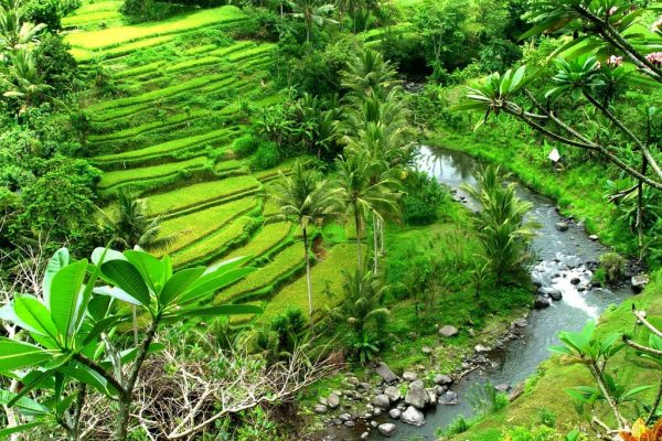 ubud-valley-bictours